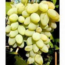 Vynuogė Arkadia